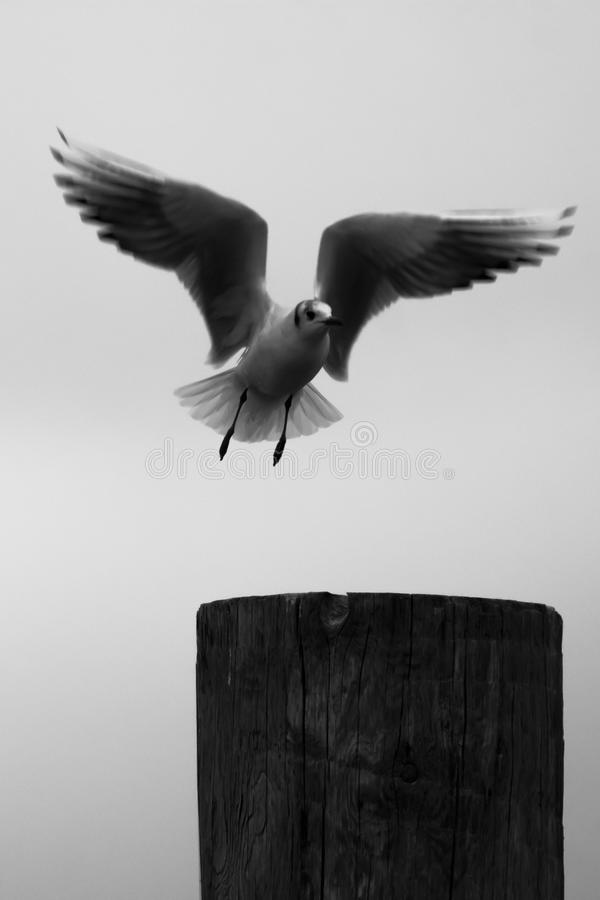 Vogelvlucht royalty-vrije stock afbeeldingen