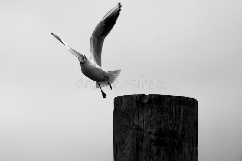 Vogelvlucht stock fotografie
