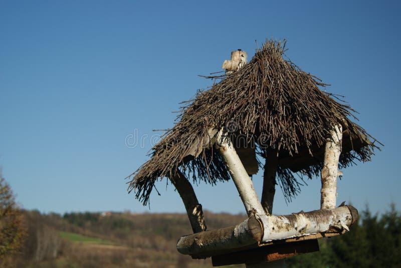 Vogelvoeder stock afbeeldingen