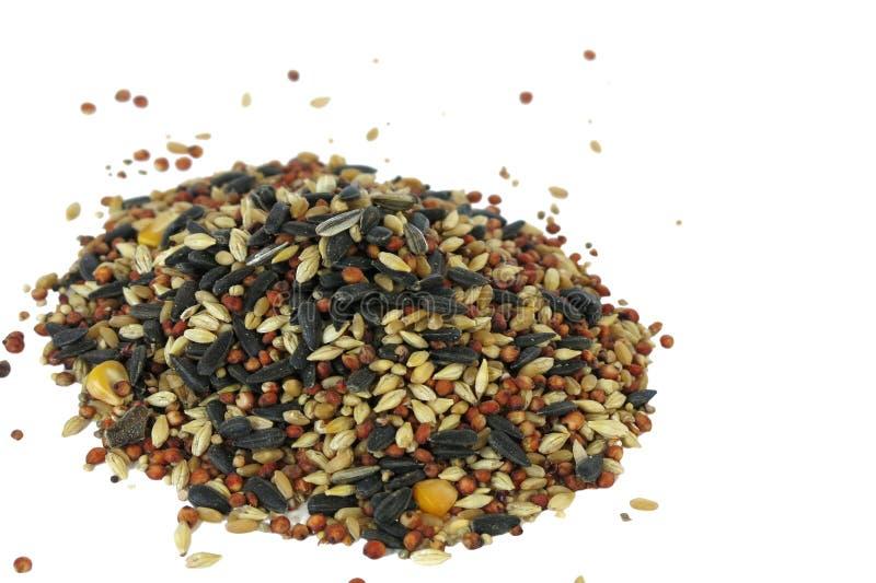 Vogelvoedsel stock foto's