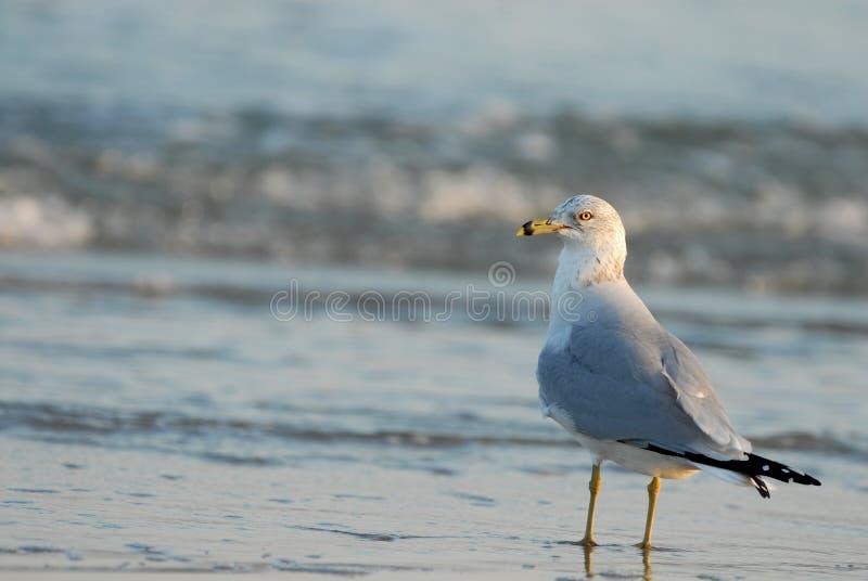 Vogelwaarneming royalty-vrije stock afbeelding