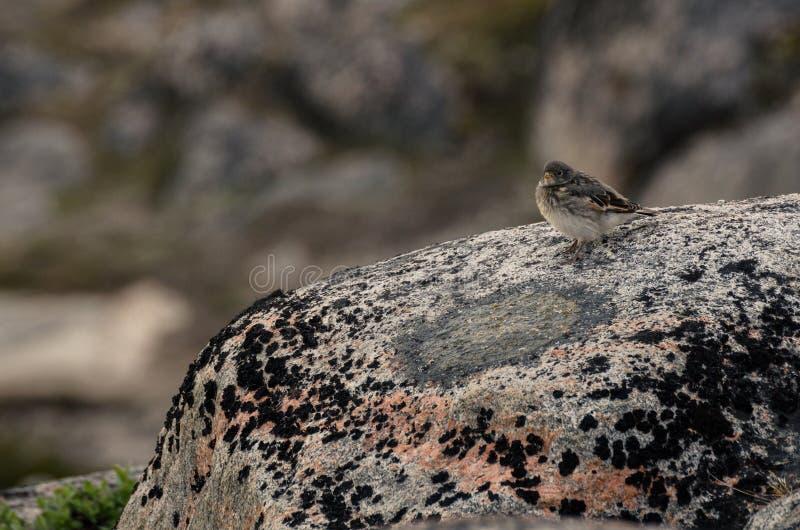 Vogelzitting op de rots stock afbeeldingen