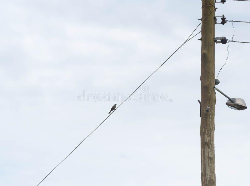 Vogelzitting op elektriciteitsdraad 01 stock foto's