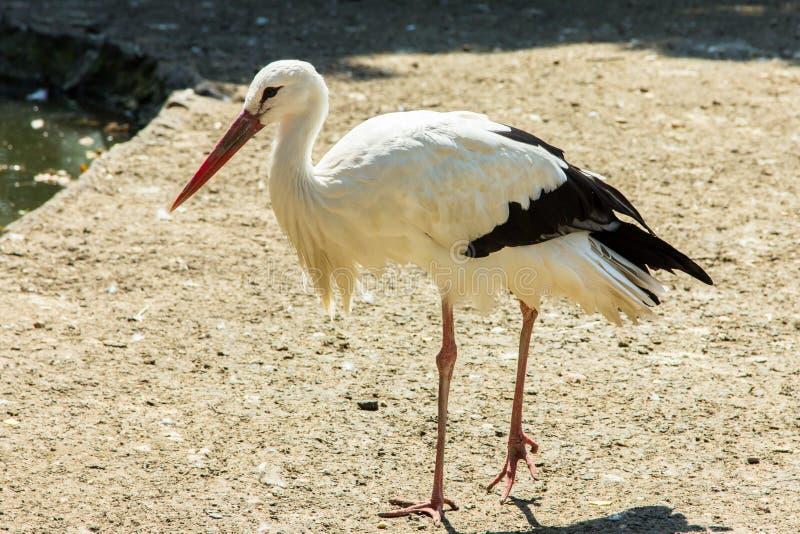 Vogelzoo der Storchwild lebenden tiere zoologisch stockbild