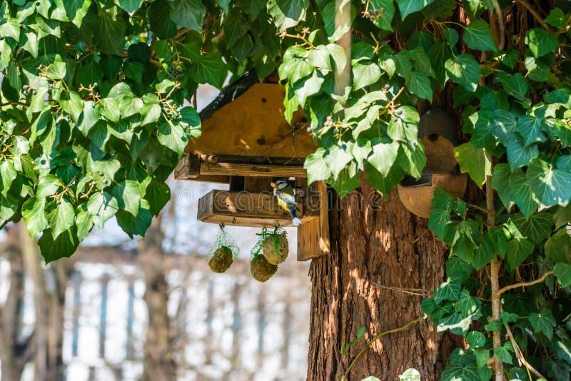 Vogelzufuhr auf dem Baum lizenzfreie stockfotos