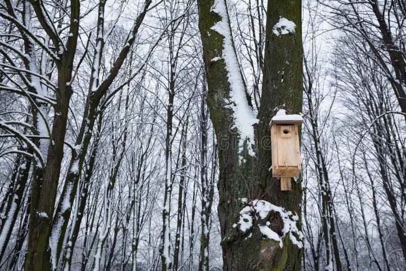 Vogelzufuhr, die hilft, den Winter zu überleben lizenzfreie stockbilder