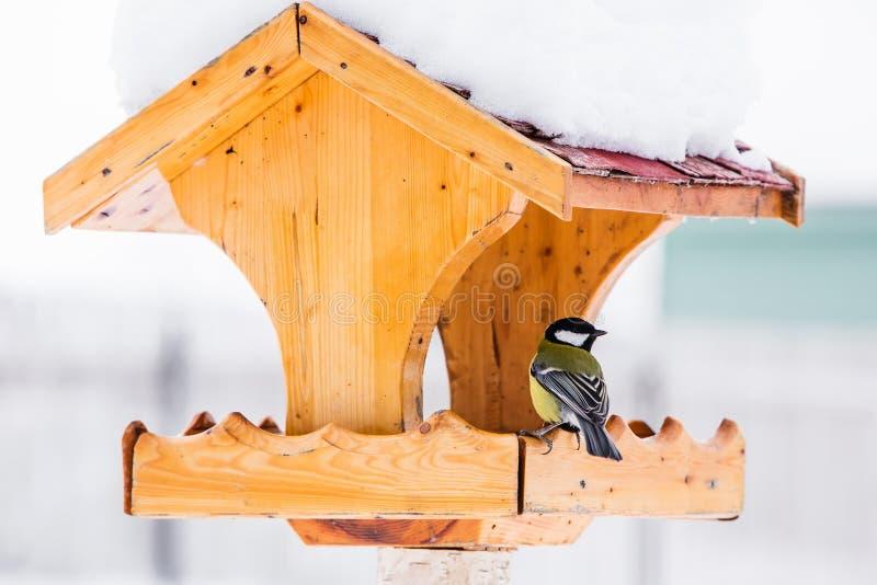 Vogelzufuhr mit Kohlmeise im Winter stockfotografie