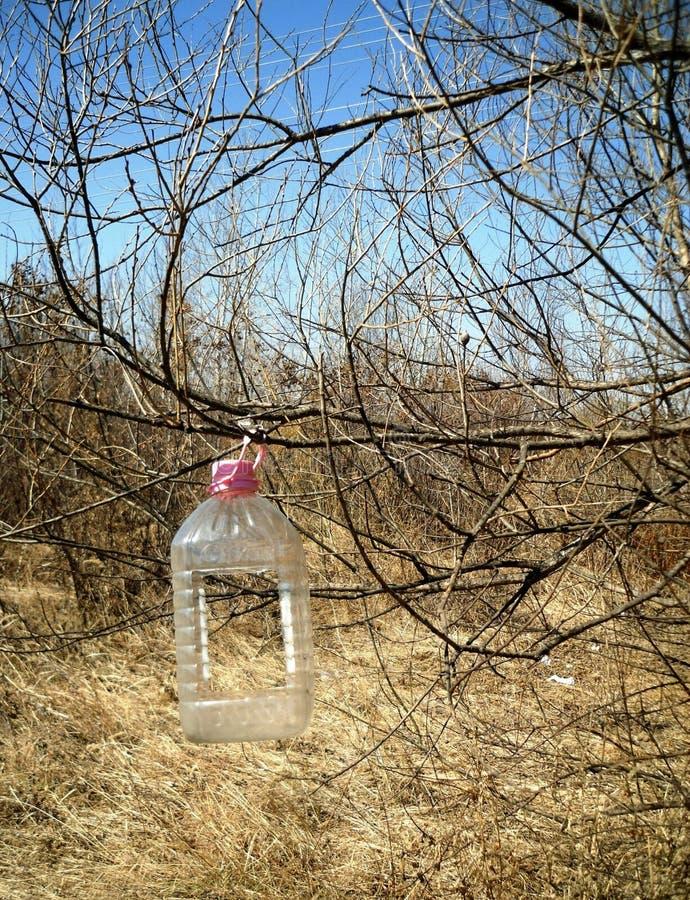 Download Vogelzufuhr Von Einer Plastikflasche Stockfoto - Bild von flasche, plastik: 90237646