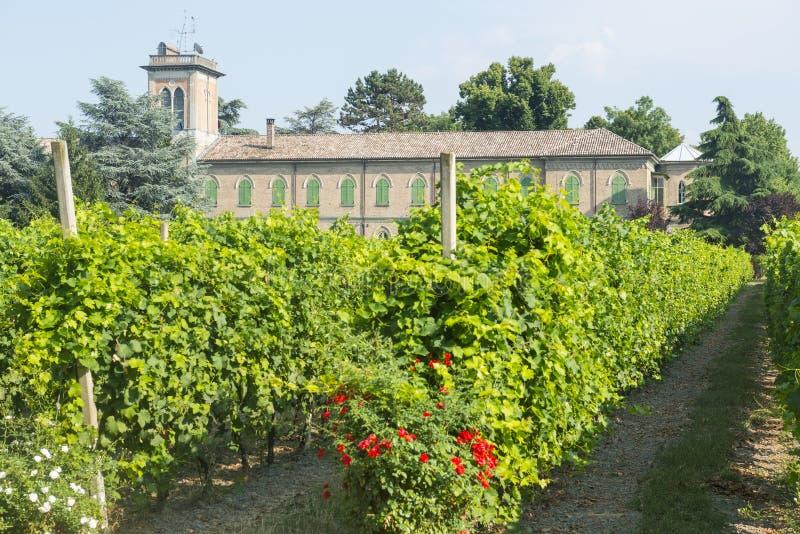 Voghera, school vith vineyard. Voghera (Pavia, Lombardy, Italy), school with vineyard at summer royalty free stock image