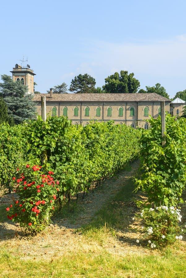Voghera, school vith wijngaard stock fotografie