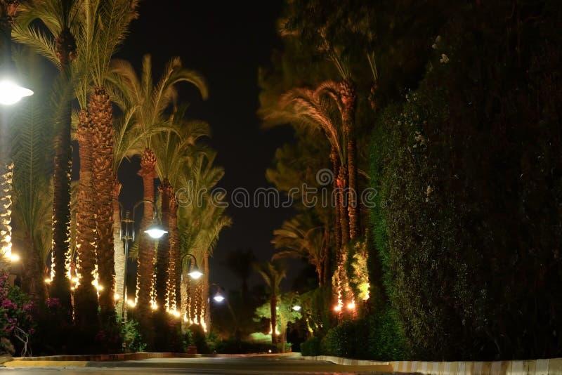 Voie avec les paumes et les réverbères tropicaux la nuit images libres de droits