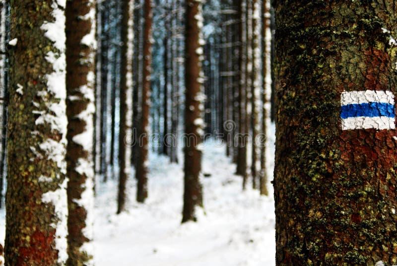 Voie bleue dans la forêt d'hiver photo stock