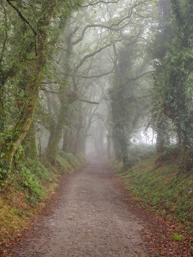 Voie brumeuse de Camino - Mamurria image libre de droits