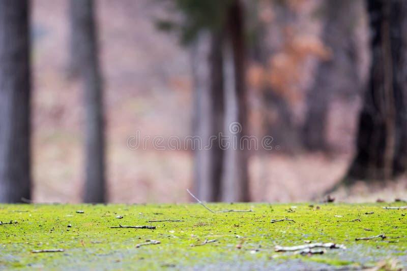 Voie couverte de la mousse vert clair image libre de droits