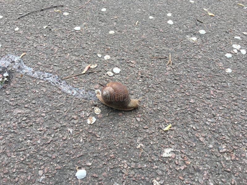 Voie d'asphalte d'escargot image libre de droits