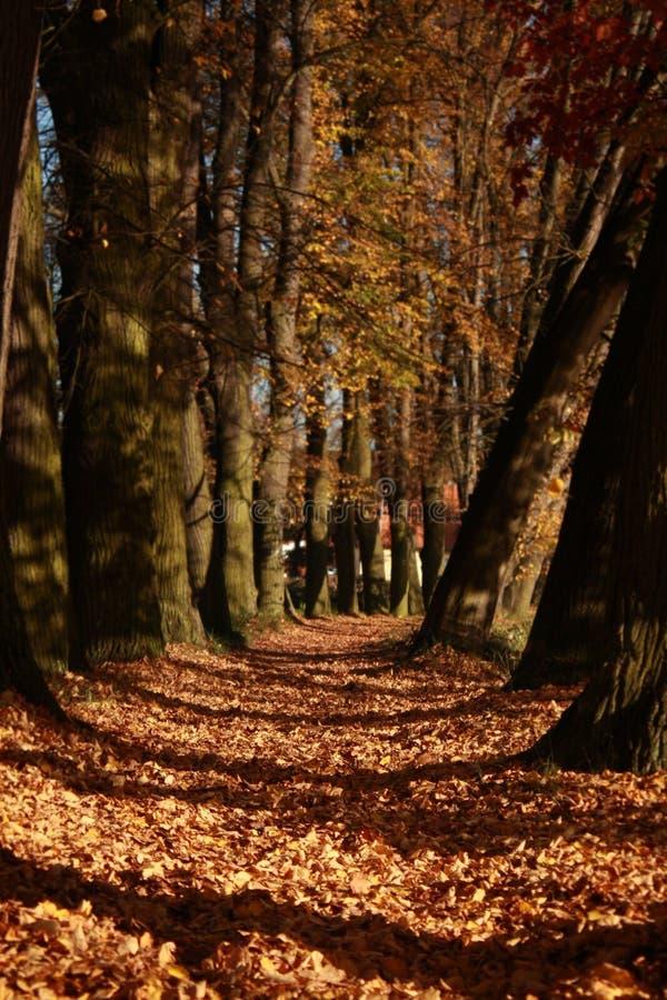 Voie d'automne par le lac photo stock