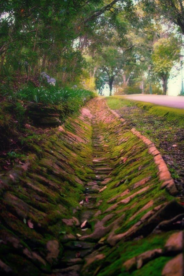 Voie d'eau en bas de la colline et de la mousse près de la route photos libres de droits