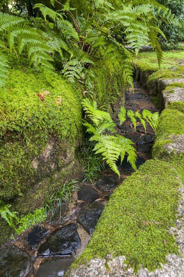Voie d'eau japonaise traditionnelle de jardin avec le ruprechtii d'Asplenium image libre de droits