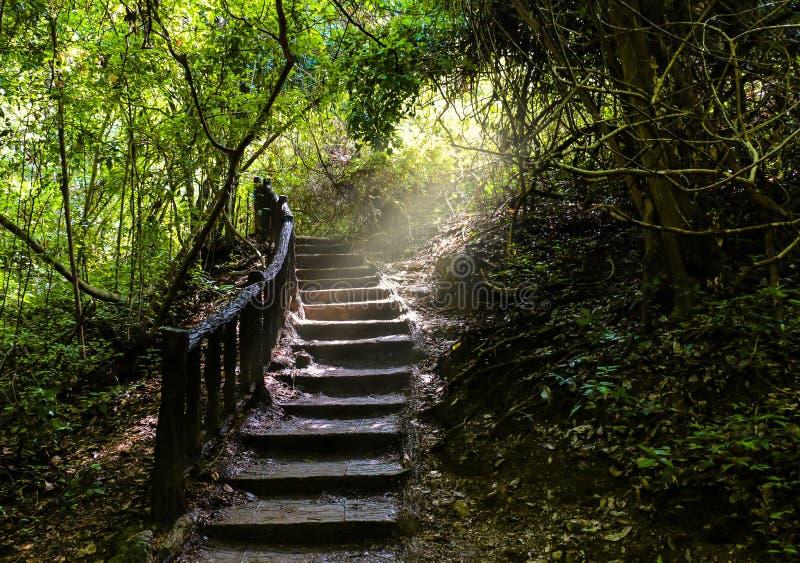 Voie d'escalier allant un long chemin jusqu'à la forêt dense fraîchement verte photos stock
