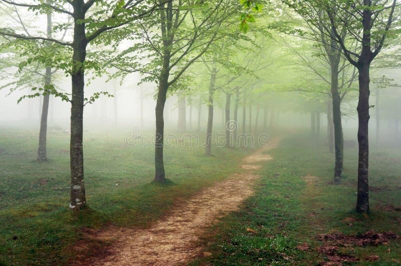 Voie dans la forêt brumeuse photos libres de droits