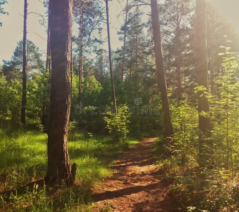 voie dans la forêt d'été photographie stock libre de droits