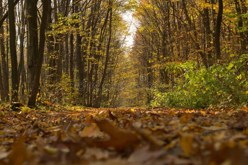 Voie dans la forêt d'automne image stock