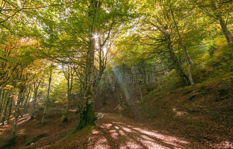 Voie dans la forêt d'automne avec la lumière du soleil en parc de Monte Cucco photo libre de droits