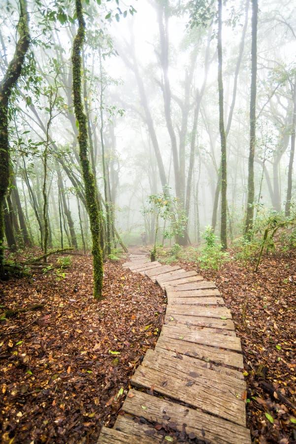 Voie dans la forêt de la Thaïlande photographie stock libre de droits