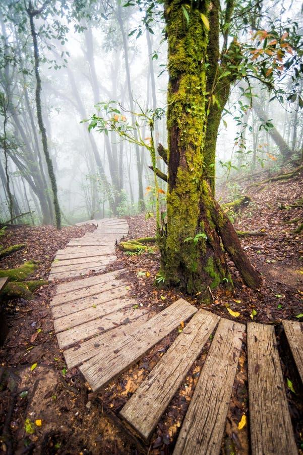 Voie dans la forêt de la Thaïlande image stock