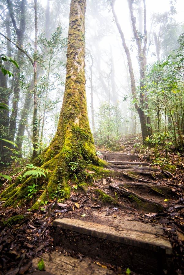 Voie dans la forêt de la Thaïlande photo stock