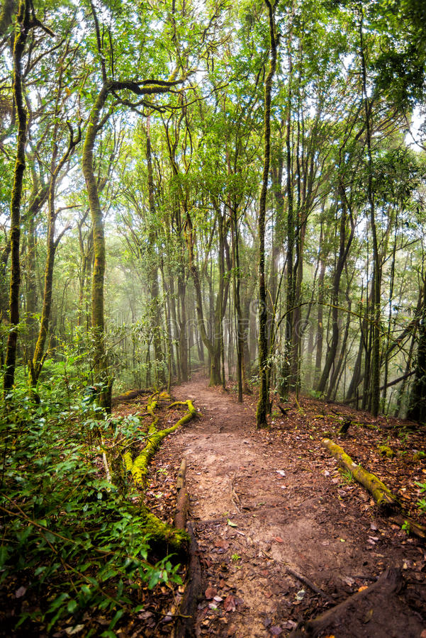Voie dans la forêt de la Thaïlande photographie stock