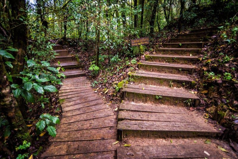 Voie dans la forêt de la Thaïlande image libre de droits