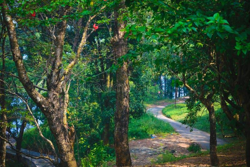Voie dans le chemin de terre vert Marsh Oak Trees rampant de forêt Paysage rêveur avec les arbres brumeux, voies de montagne, feu photographie stock libre de droits