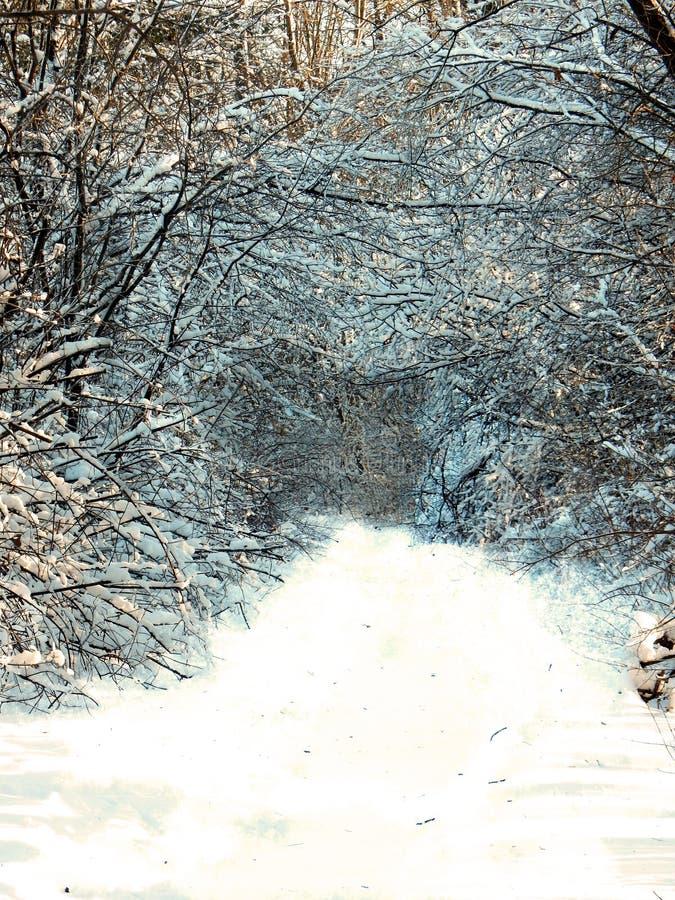 Voie dans les bois couverts de la neige photo libre de droits