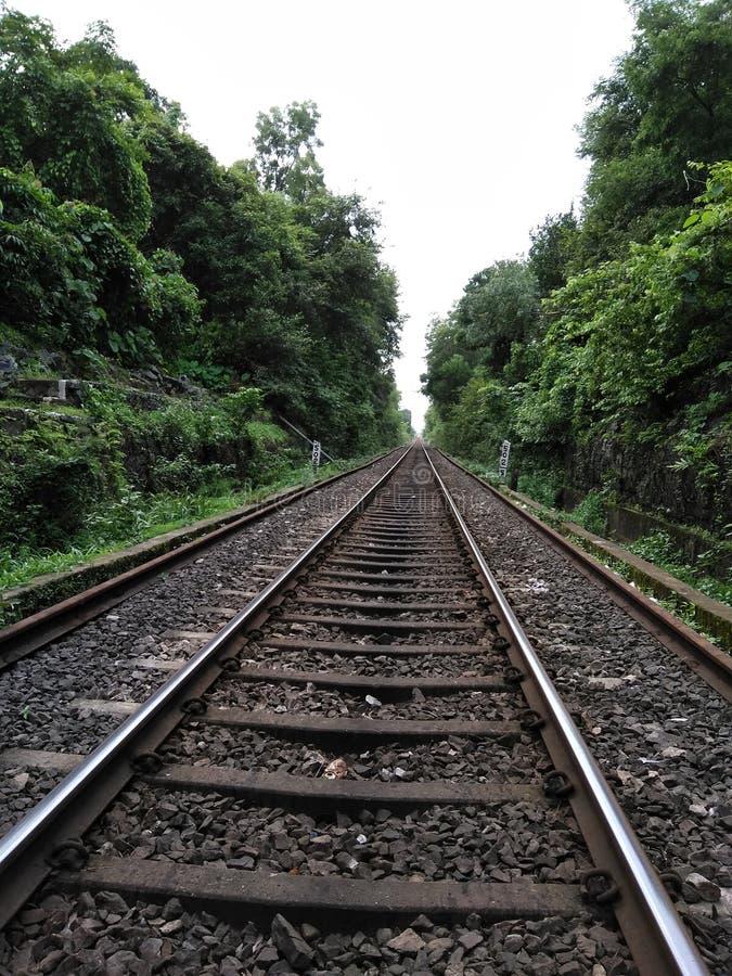 Voie de chemin de fer de vue entre les arbres verts photographie stock libre de droits