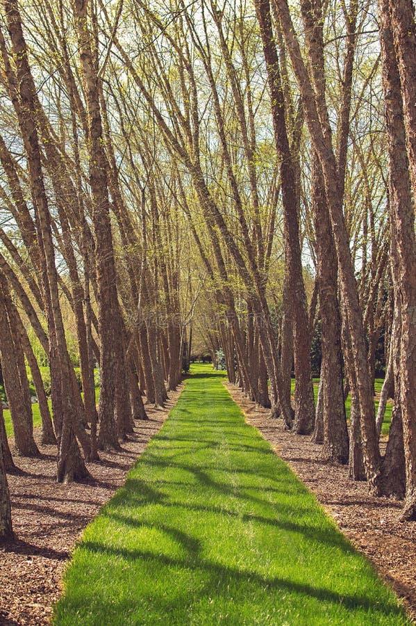 Voie de chemin par les arbres photographie stock