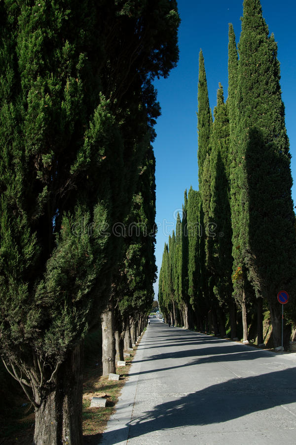 Voie de Cypress, Montepulciano, Italie photos libres de droits