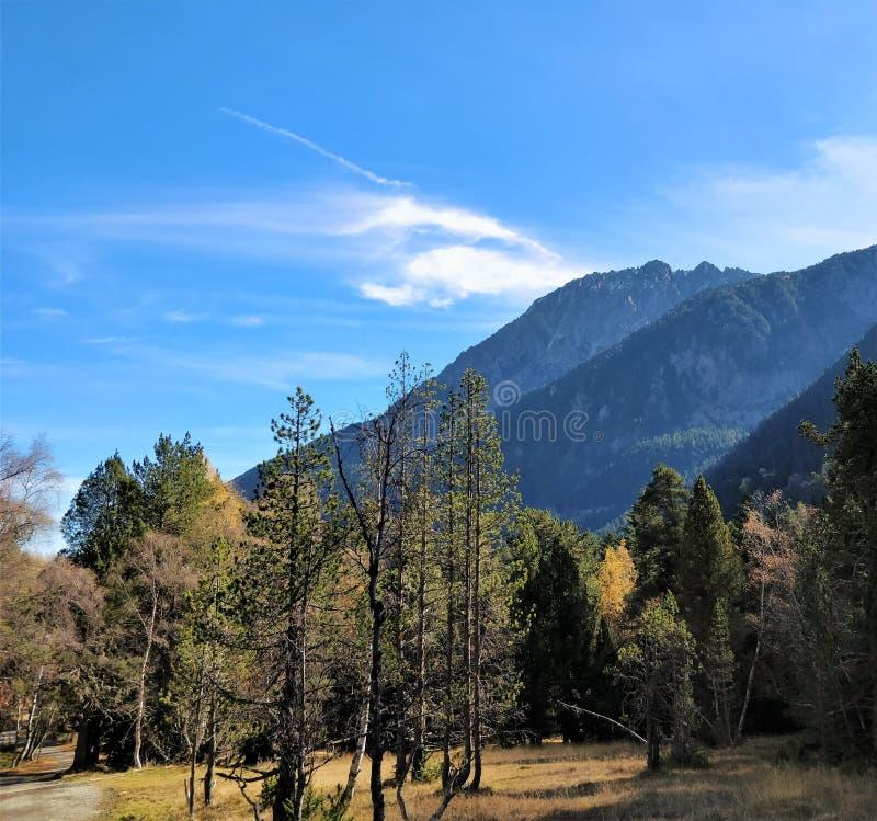 Voie de forêt et la vue de montagne dans le dos photos libres de droits