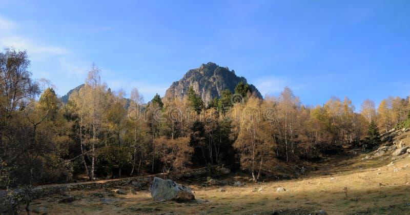 Voie de forêt et la vue de montagne dans le dos images libres de droits