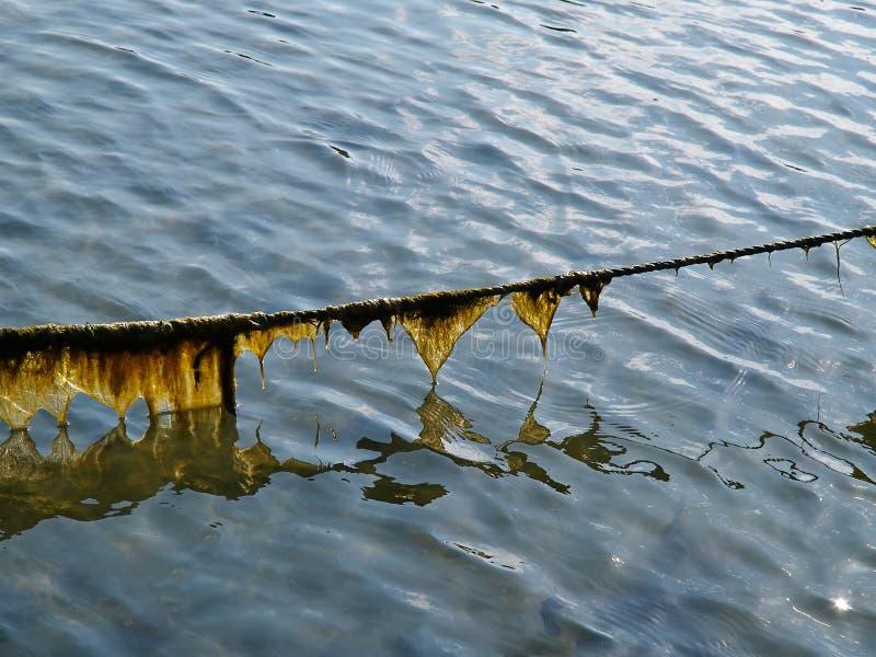 Voie de maritime corde de bateau couverte d'algue et d'algues photo libre de droits