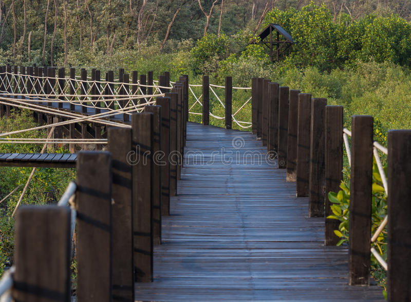 Voie en bois de chemin parmi la forêt de palétuvier photo libre de droits