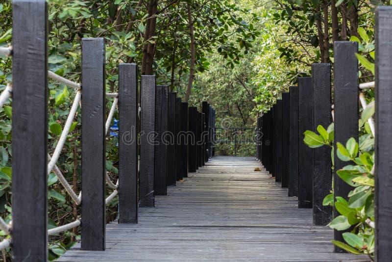 Voie en bois de chemin parmi la forêt de palétuvier photographie stock libre de droits