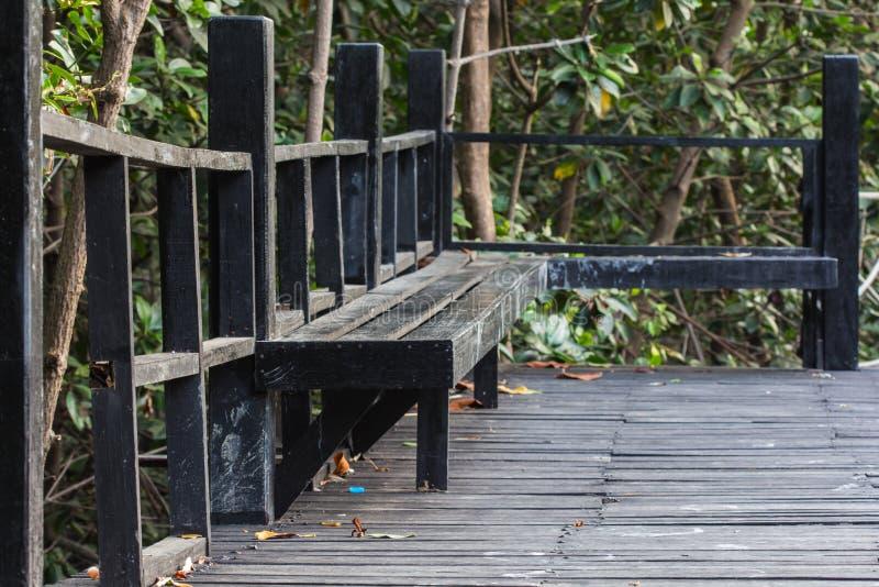 Voie en bois de chemin parmi la forêt de palétuvier photos libres de droits
