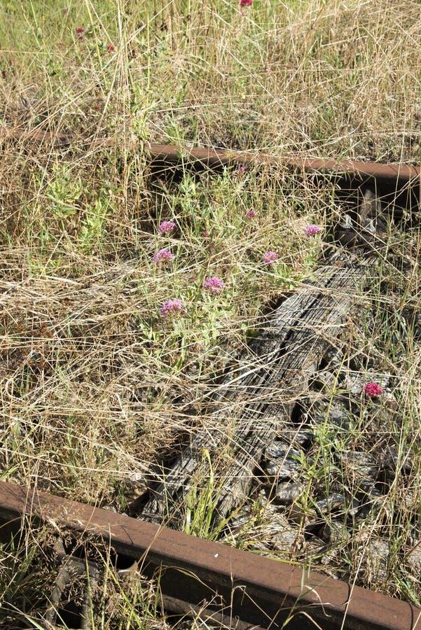 Voie ferrée rouillée couverte de mauvaises herbes photo stock