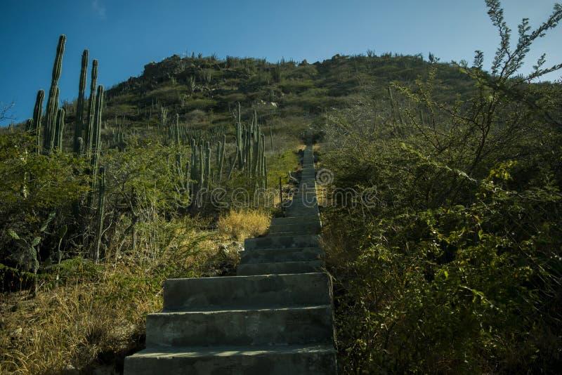 Voie jusqu'au dessus de Hooiberg, Aruba photo libre de droits