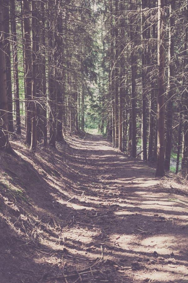 Download Voie par la forêt conifére photo stock. Image du distance - 76081560