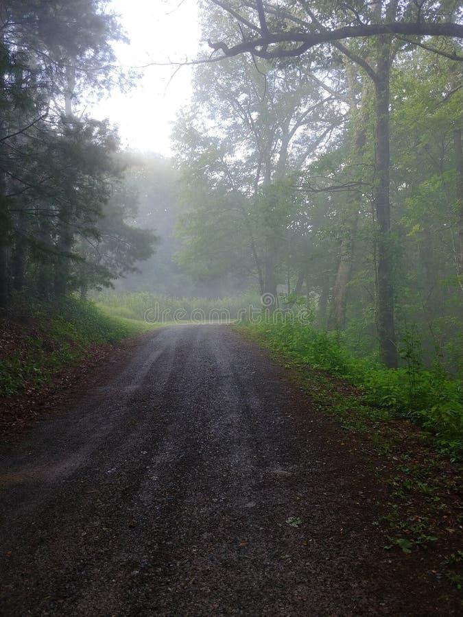 Voie par la forêt en conditions brumeuses image stock