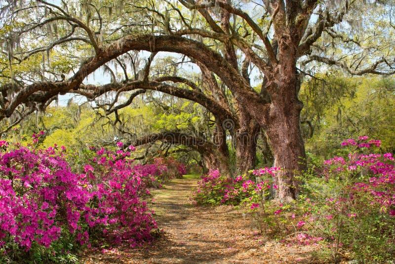 Voie par le beau parc de floraison photos stock