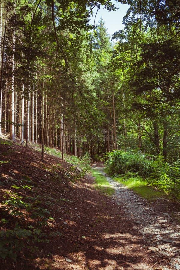 Download Voie Par Une Forêt Conifére Photo stock - Image du ombres, verdure: 76081408