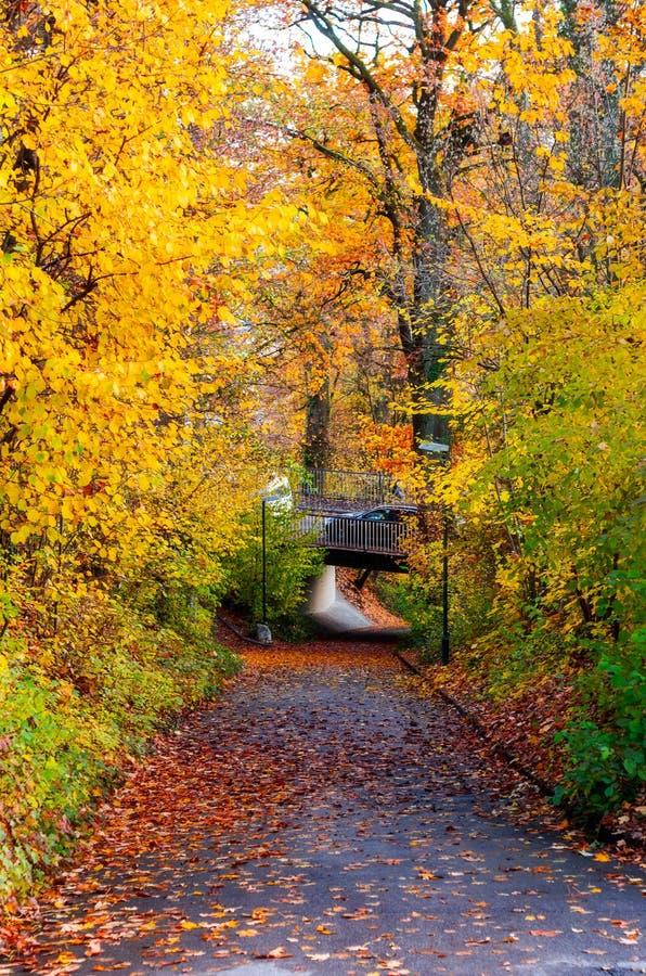 Voie pavée par un automne d'arbres de parc de ville image libre de droits